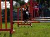 agility-2015-134